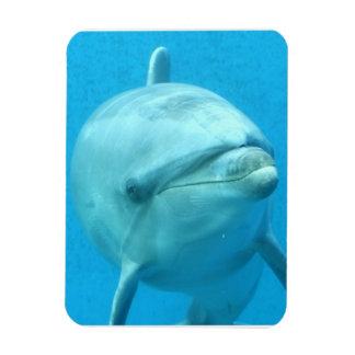 Bottlenose Dolphin Underwater Rectangular Magnets