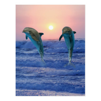 Bottlenose Dolphins at sunrise Postcard