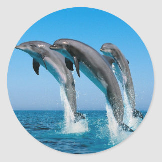 bottlenose dolphins jumping out of clear blue sea classic round sticker