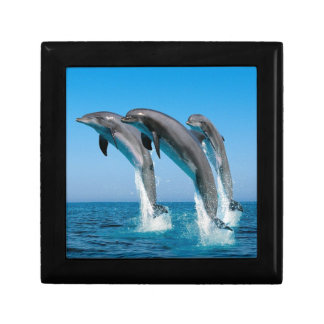 bottlenose dolphins jumping out of clear blue sea trinket boxes