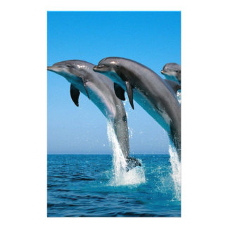 bottlenose dolphins jumping out of clear blue sea customized stationery