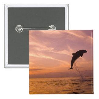 Bottlenose Dolphins Tursiops truncatus) 10 Pin