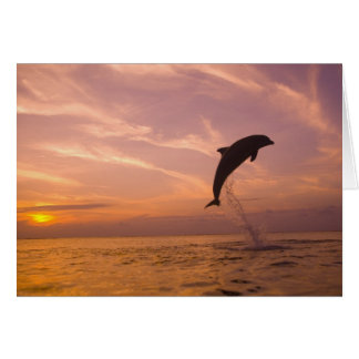 Bottlenose Dolphins Tursiops truncatus) 10 Greeting Card