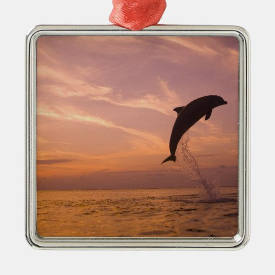 Bottlenose Dolphins Tursiops truncatus) 10 Metal Ornament