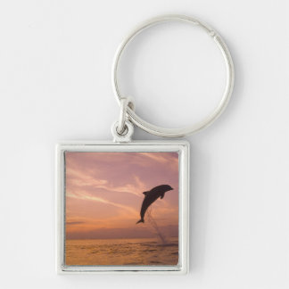 Bottlenose Dolphins Tursiops truncatus) 10 Silver-Colored Square Keychain