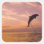 Bottlenose Dolphins Tursiops truncatus) 10 Square Sticker