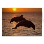 Bottlenose Dolphins Tursiops truncatus) 12 Card