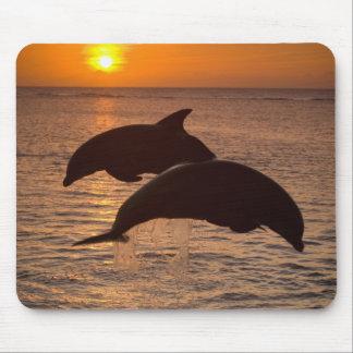 Bottlenose Dolphins Tursiops truncatus) 12 Mousepad
