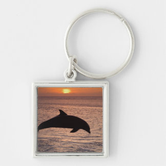 Bottlenose Dolphins Tursiops truncatus) 13 Silver-Colored Square Keychain