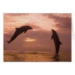 Bottlenose Dolphins Tursiops truncatus) 14 Card