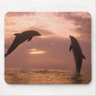 Bottlenose Dolphins Tursiops truncatus) 14 Mouse Pad