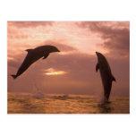 Bottlenose Dolphins Tursiops truncatus) 14 Postcard