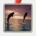 Bottlenose Dolphins Tursiops truncatus) 15 Ornament
