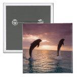 Bottlenose Dolphins Tursiops truncatus) 15 Pin