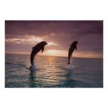 Bottlenose Dolphins Tursiops truncatus) 15 Posters