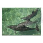 Bottlenose Dolphins Tursiops truncatus) 16 Greeting Cards
