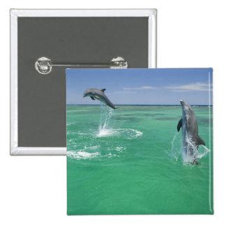 Bottlenose Dolphins Tursiops truncatus) 17 Pinback Button