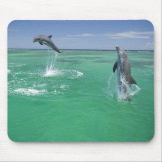 Bottlenose Dolphins Tursiops truncatus) 17 Mouse Pad