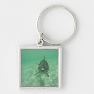 Bottlenose Dolphins Tursiops truncatus) 18 Silver-Colored Square Keychain