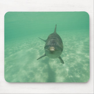 Bottlenose Dolphins Tursiops truncatus) 18 Mouse Pad
