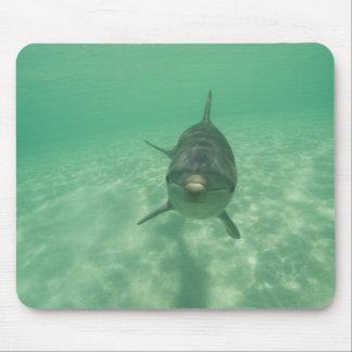 Bottlenose Dolphins Tursiops truncatus) 18 Mousepads