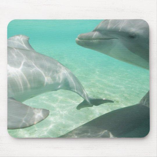 Bottlenose Dolphins Tursiops truncatus) 19 Mouse Pad