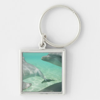 Bottlenose Dolphins Tursiops truncatus) 19 Silver-Colored Square Keychain