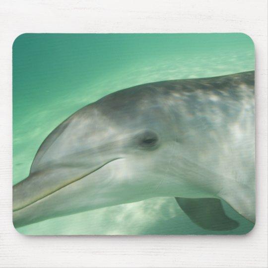 Bottlenose Dolphins Tursiops truncatus) 20 Mouse Pad