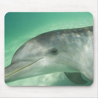 Bottlenose Dolphins Tursiops truncatus) 20 Mouse Pads