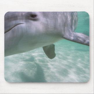 Bottlenose Dolphins Tursiops truncatus) 21 Mouse Pad