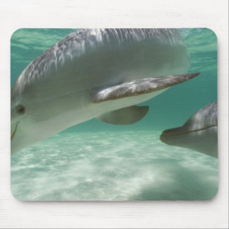 Bottlenose Dolphins Tursiops truncatus) 22 Mouse Pad