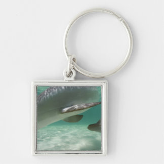 Bottlenose Dolphins Tursiops truncatus) 22 Silver-Colored Square Keychain