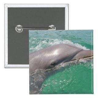 Bottlenose Dolphins Tursiops truncatus) 23 Button