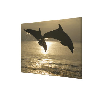 Bottlenose Dolphins Tursiops truncatus) 23 Canvas Print