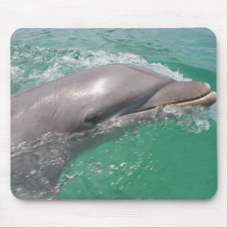 Bottlenose Dolphins Tursiops truncatus) 23 Mouse Pad