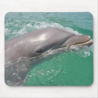 Bottlenose Dolphins Tursiops truncatus) 23 Mousepad
