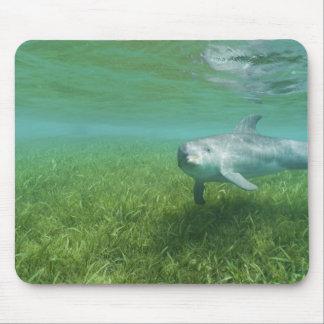 Bottlenose Dolphins Tursiops truncatus) 24 Mouse Pad