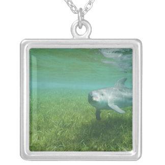 Bottlenose Dolphins Tursiops truncatus) 24 Jewelry