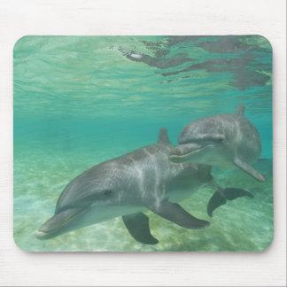 Bottlenose Dolphins Tursiops truncatus) 25 Mousepads