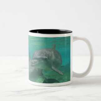 Bottlenose Dolphins Tursiops truncatus) 25 Two-Tone Coffee Mug