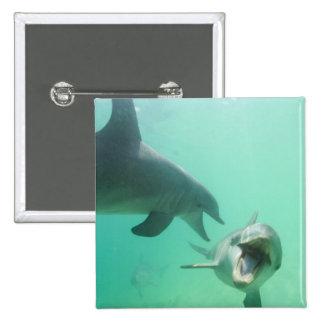 Bottlenose Dolphins Tursiops truncatus) 27 Buttons