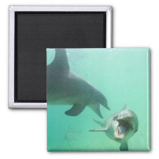Bottlenose Dolphins Tursiops truncatus 27 Fridge Magnet
