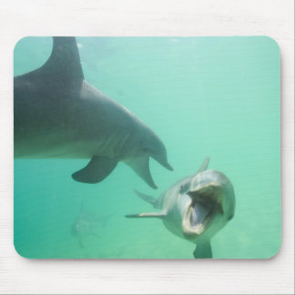Bottlenose Dolphins Tursiops truncatus) 27 Mouse Pad