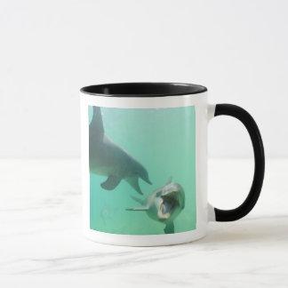 Bottlenose Dolphins Tursiops truncatus) 27 Mug