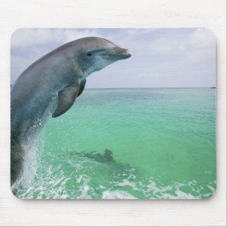 Bottlenose Dolphins Tursiops truncatus) 29 Mousepads