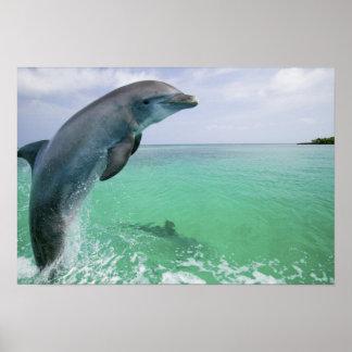Bottlenose Dolphins Tursiops truncatus) 29 Posters