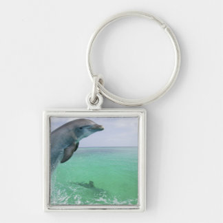Bottlenose Dolphins Tursiops truncatus) 29 Silver-Colored Square Keychain
