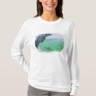 Bottlenose Dolphins Tursiops truncatus) 29 T-Shirt