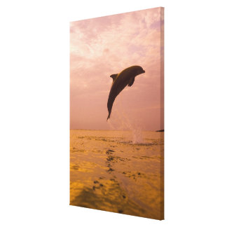 Bottlenose Dolphins (Tursiops truncatus) 2 Canvas Print