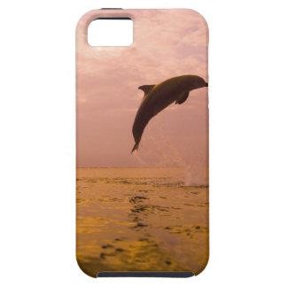 Bottlenose Dolphins (Tursiops truncatus) 2 iPhone SE/5/5s Case
